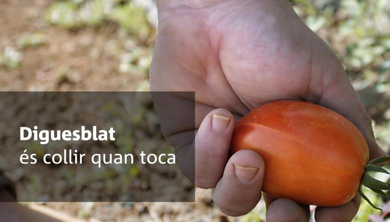 Verdura de temporada i ecològica, compra-la a Diguesblat