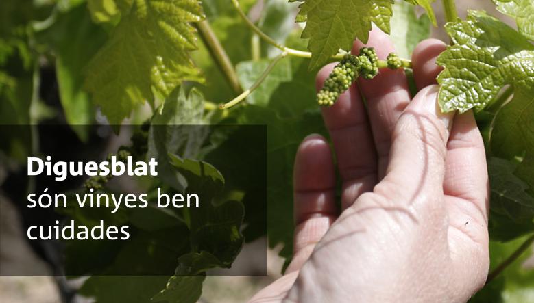 Diguesblat són vinyes ben cuidades  Grans vins de petits cellers per a tu